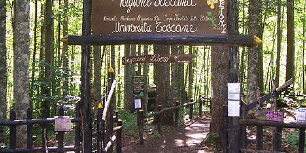 The Abetone forest botanical garden